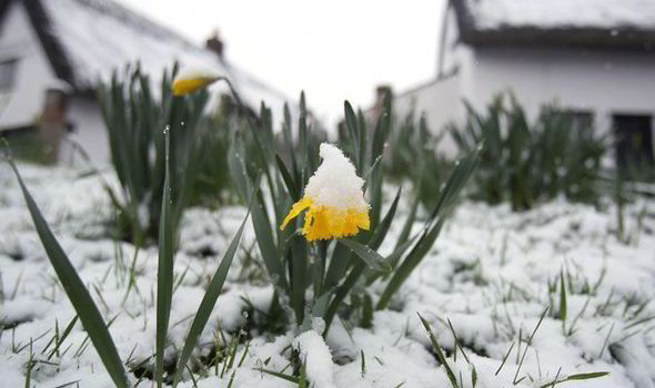 bad spring
